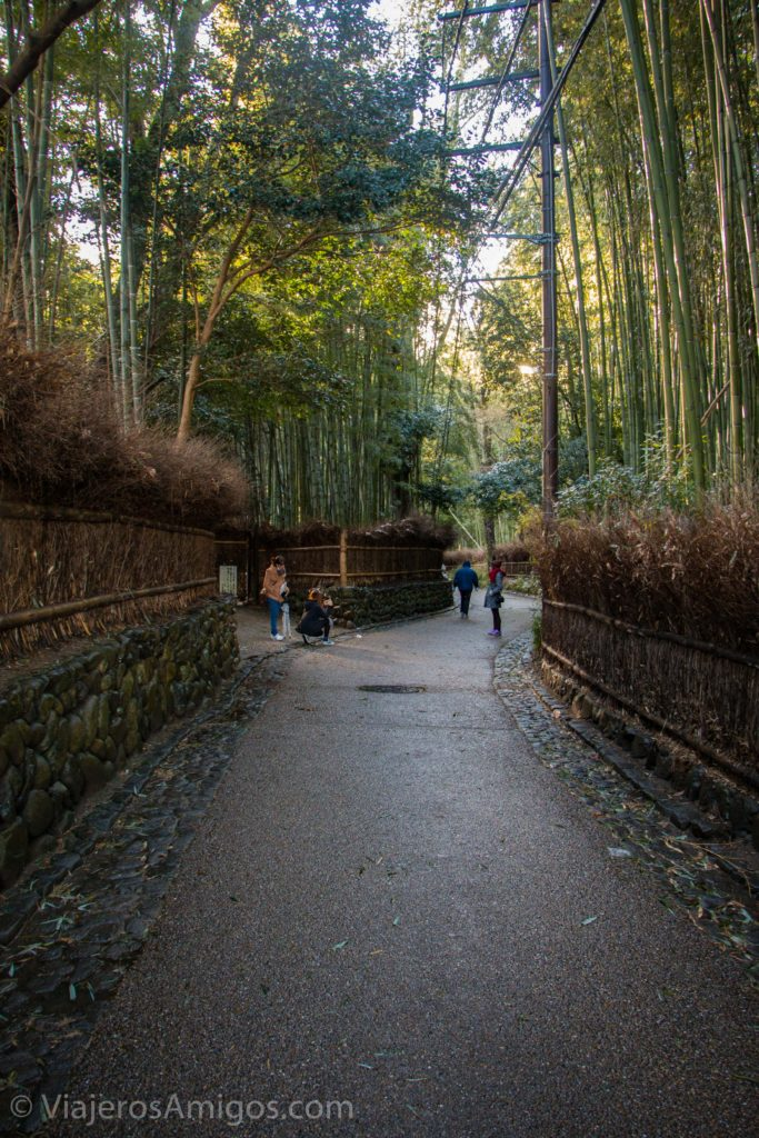 arashiyama bamboo forest path